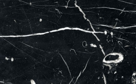 nero marquina limestone close-up