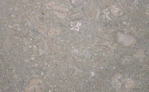 Fossil limestone close-up