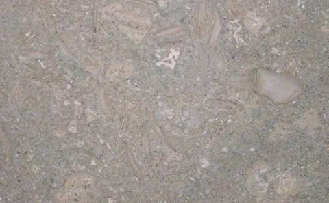 Fossil limestone close-up